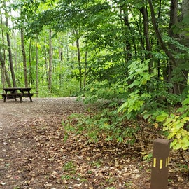 Site 11, wooded site