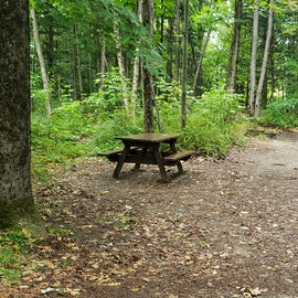Site 31, wooded site
