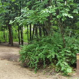 Site 12, wooded site