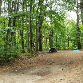 Site 13, wooded site