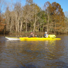 Paddle to primitive camp site ccu#4 is approx. 1 to 1.3 miles from boat ramp at Lake Fausse Point State Park.