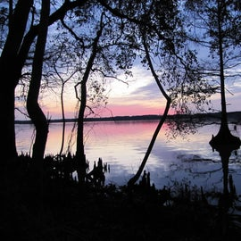 One evening at Lake Fausse Point State Park.