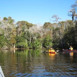 On Lacassine Bayou near Lorrain Park, sw Louisiana