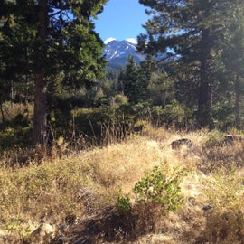 Looking up to Mount Shasta from my camp.