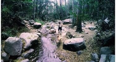 Spruce Grove Trail Campground
