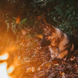 Our pooch by fire light 🔥