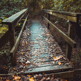 Bridge on nature trail