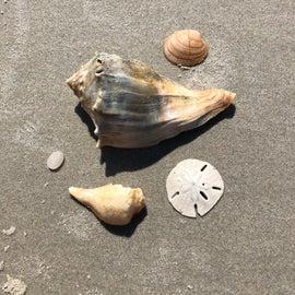 Shells we found on Bear Island