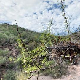 Bird nest amongst thistle