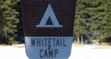Whitetail Camp