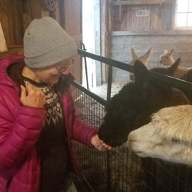 It was so much fun to feed the Alpacas