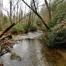 Avery Creek runs parallel to the forest road and adjacent to the campsites.