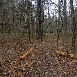 This is just one of the many trails leading from the campsites or close to the campsites.