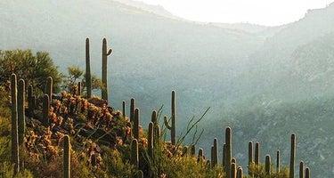 Saguaro National Park Wilderness Permits