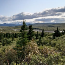 Views of Denali are available at mile 10 in the Park if the weather cooperates. The shuttle buses run frequently from Campground to Campground and stop at some easy trailheads and drop offs to the backcountry.