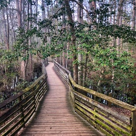 Boardwalk on one of the park trails