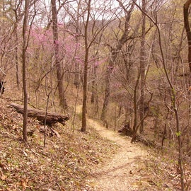 One of the trails in early spring