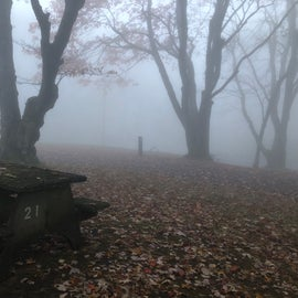 The morning fog persisted throughout the day