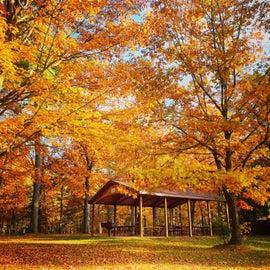Gorgeous in autumn.