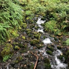 the Mt. Tom Creek