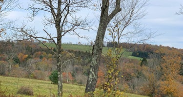 Fields of Dreams at Callicoon