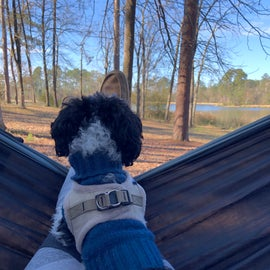 Hammock with a view (and a sweet puppy)
