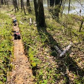 Horse trail , down near First Creek