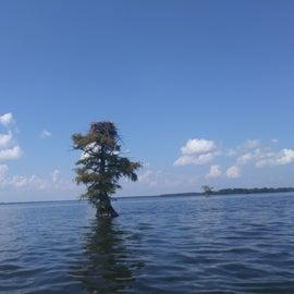 Taken while kayaking on the lake