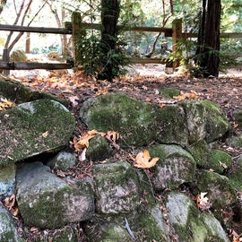Moss covered rock walls.