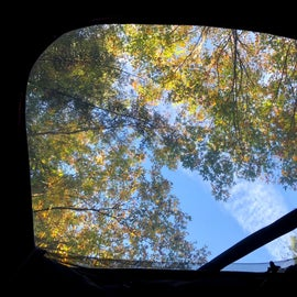 The view from the skylight in our tent.