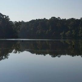 Part of lake