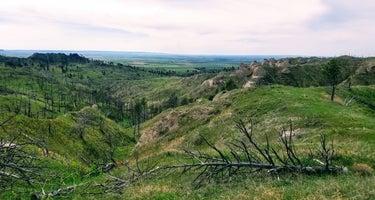 Pine Ridge Dispersed Camping