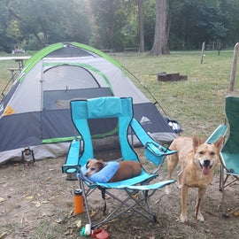 Our puppies having a blast! First camping gear trip for the one on the right!