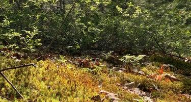 Camp Nihan Environmental Education Camp