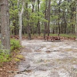 Site 103 Wellfleet Hollow State Park near parking lot
