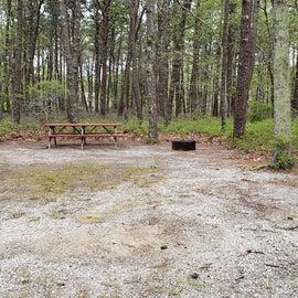Site 105 Wellfleet Hollow State Park