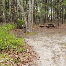 Site 106 Wellfleet Hollow State Park