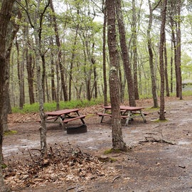 Group site from one end Wellfleet Hollow State Park