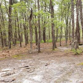Group site Wellfleet Hollow State Park