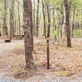89 Wellfleet Hollow State Park