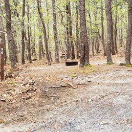 90 Wellfleet Hollow State Park