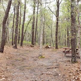 92 Wellfleet Hollow State Park