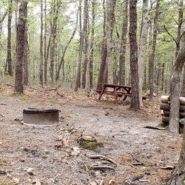 93 Wellfleet Hollow State Park