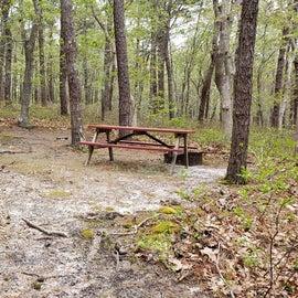 94 Wellfleet Hollow State Park