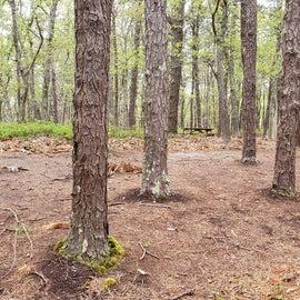 96 Wellfleet Hollow State Park