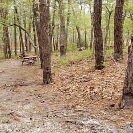 98 Wellfleet Hollow State Park