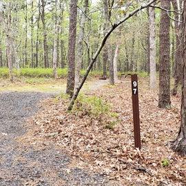 97 Wellfleet Hollow State Park