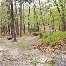 99 Wellfleet Hollow State Park