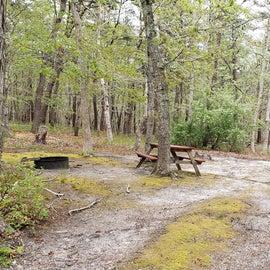 1 Wellfleet Hollow State Park