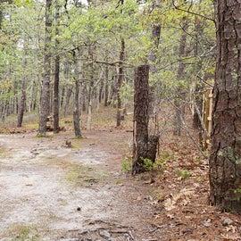 3 Wellfleet Hollow State Park